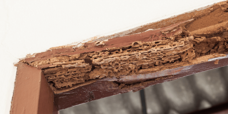 Termite damage insurance claim